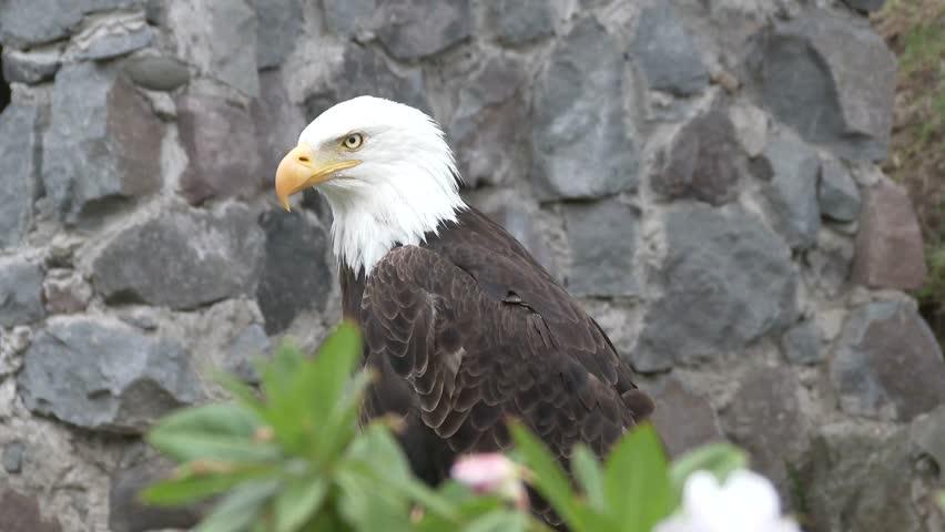 Header of American eagle