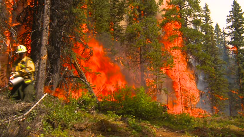 forest fire, firefighter walking along with torcher - HD stock video clip