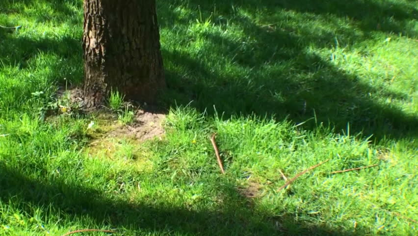 Squirrel playing in the park. Close up of a squirrel eating a nut. Squirrel taking a nut from a man - HD stock video clip