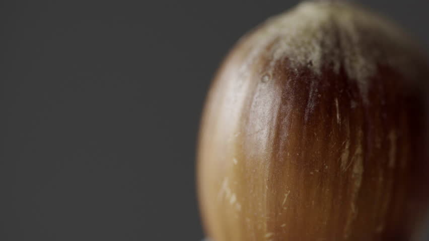 Whole Hazelnut in extreme close up UHD stock footage. A whole shelled Hazelnut in true macro close up with negative space for text overlays and a rotating movement.