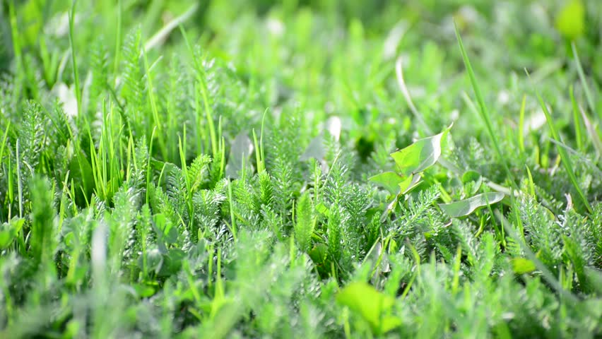 bright spring grass in  wind - HD stock footage clip