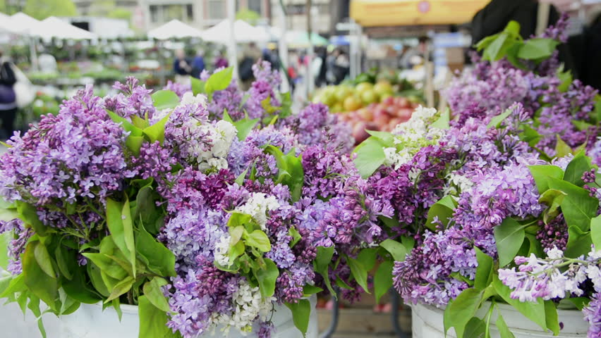 NEW YORK/USA - MAY 05 2016 Lilac flowers in the Union Square Greenmarket | Shutterstock HD Video #16386835