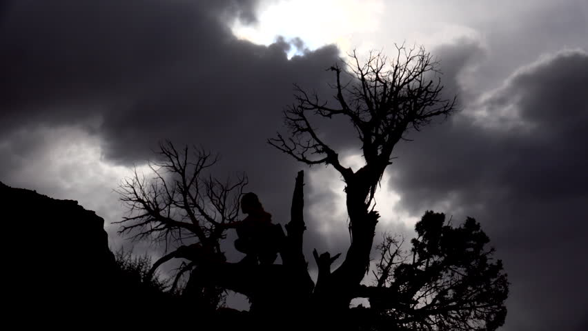 Young girl in tree, silhouetted, gingerly stands, holds onto smaller branches, walks along low-lying sturdy bark, climbs down to ground beneath dramatic sky. 4K UHD 3840x2160 - 4K stock footage clip
