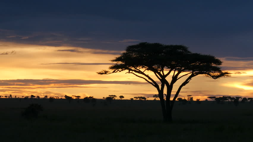 Typical African golden sunset with Acacia tree in Serengeti Tanzania - 4K stock video clip