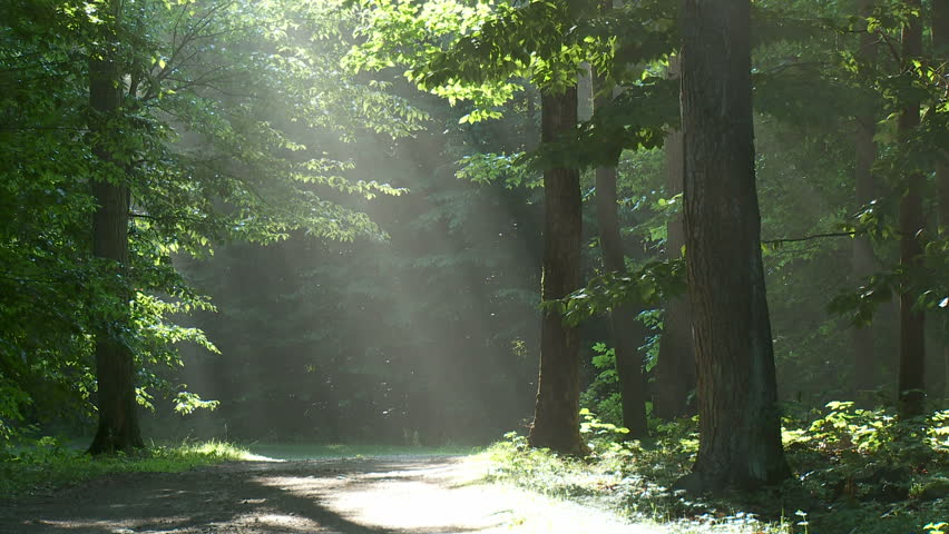Shafts of sunlight shine down onto forest road - HD stock video clip