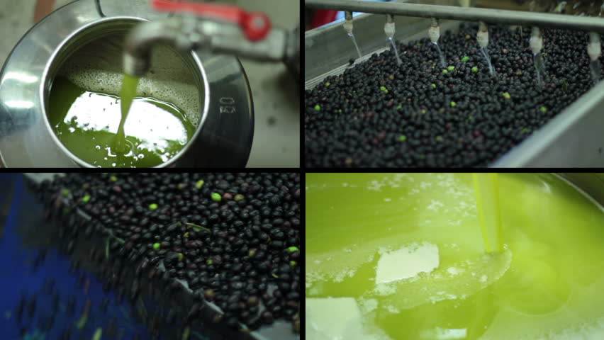 Oil mill - olive oil production- Machine washing the olives - HD stock footage clip
