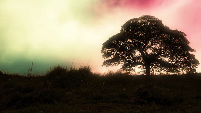 Solitary Oak tree in a meadow UHD stock footage. A lonely Oak tree standing in a lush meadow in Ultra High Definition