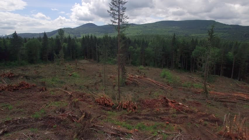 Wide Aerial of Deforestation Clear Cutting with Piles of Trees