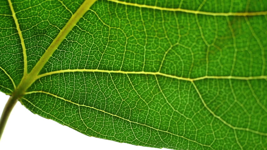 Closeup of a leaf