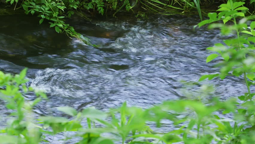 Small Creek Flowing Through Forest - HD stock footage clip