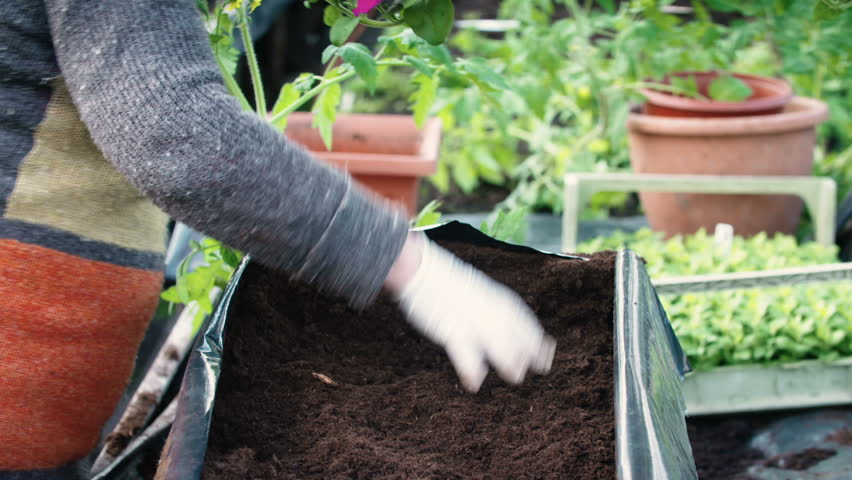 Seed planting. Maile hands working with soil.