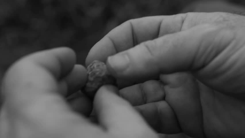 Artistic black and white shot of a girl's hands holding a tiny piece of branch - HD stock footage clip