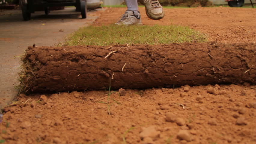 Close up at ground level of sod being put in place and rolled out. - HD stock footage clip