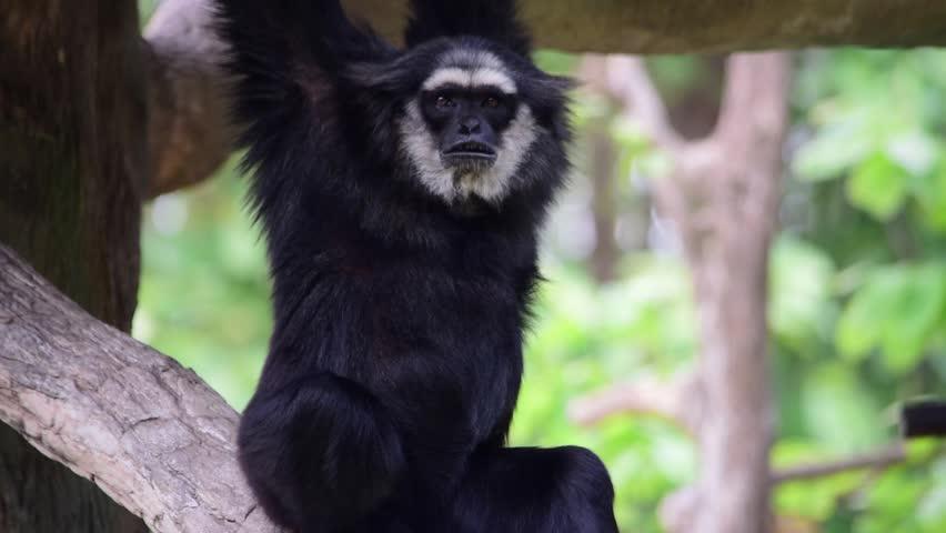 Header of Agile Gibbon