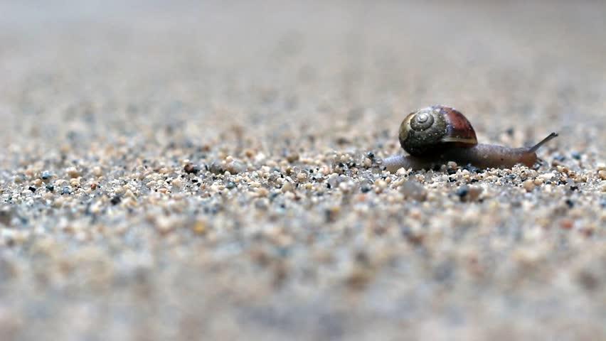 Snail crossing road - part 4 - HD stock video clip