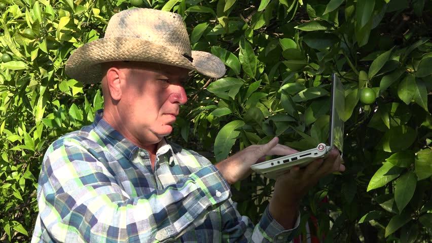 Farmer use modern technology laptop database managing oranges fruits