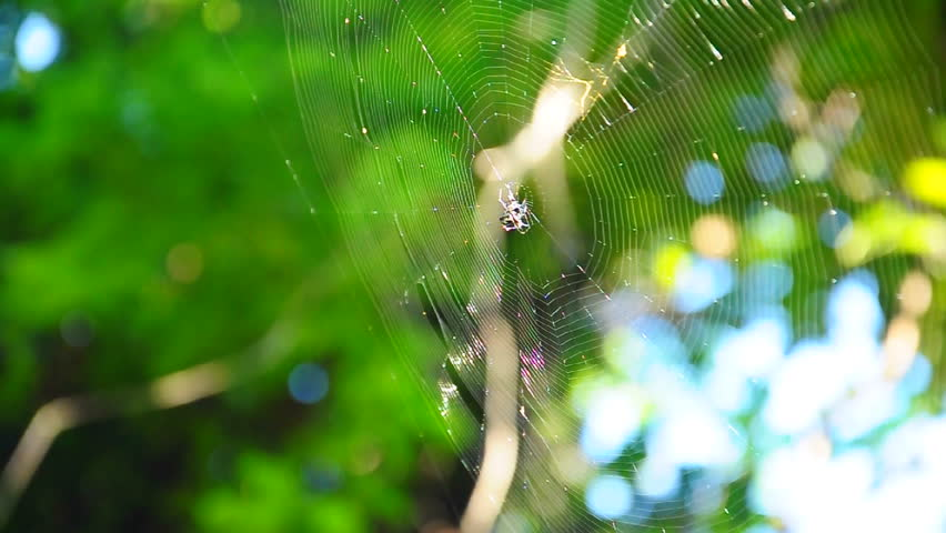 Spider web of the hunt