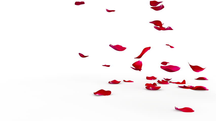 Red rose petals flying on the floor on both sides. Alpha mask included. Quality 4K video #18446089