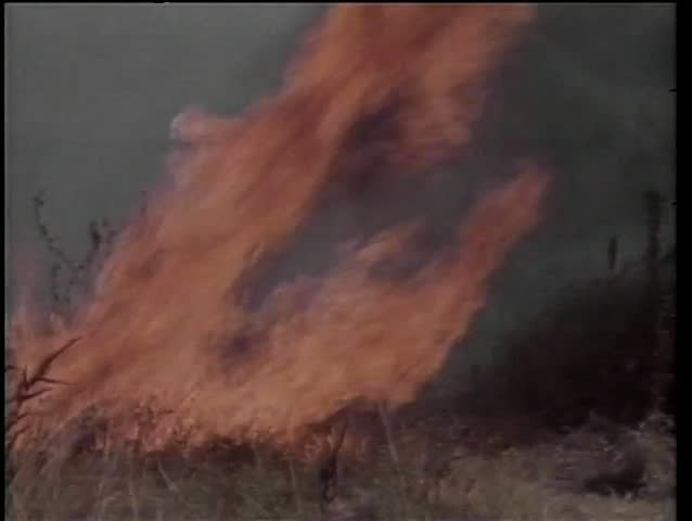 Men trying to extinguish fire in African field - SD stock video clip
