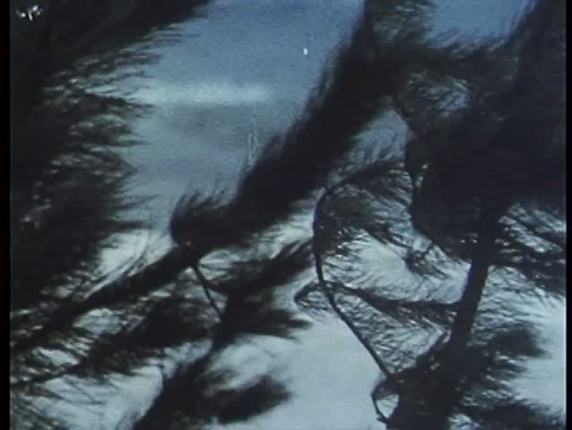 Coastal trees blowing under strong wind - SD stock video clip