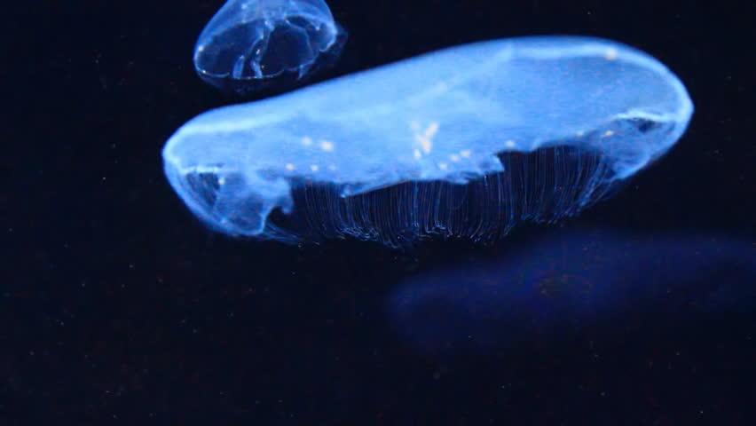 side view of medusa