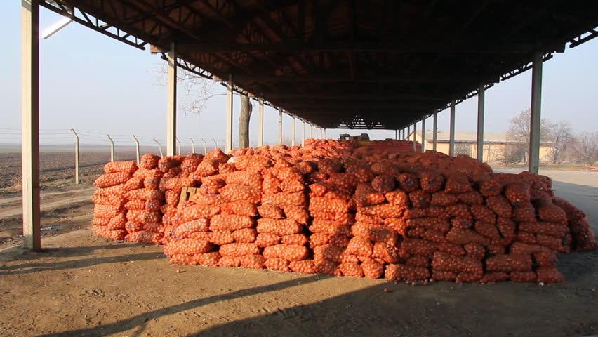 Farmer carries sacks of onions - HD stock video clip