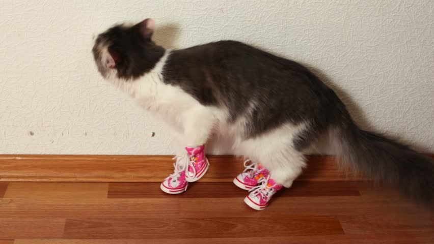 Cat in pink shoes sits on floor near white wall and then jumps - HD stock video clip