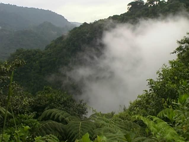 Mist swirling through cloudforest near San Rafael Falls, Ecuador - SD stock video clip