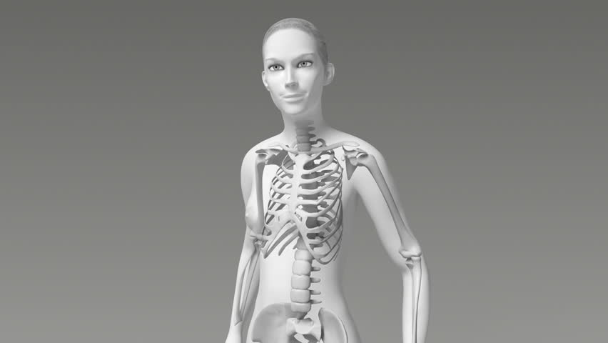 Skeletal System Anterior Front X