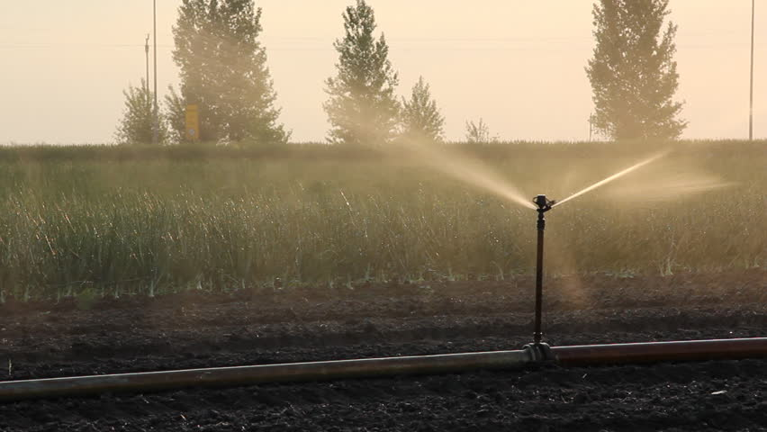 Irrigation of the field - HD stock footage clip