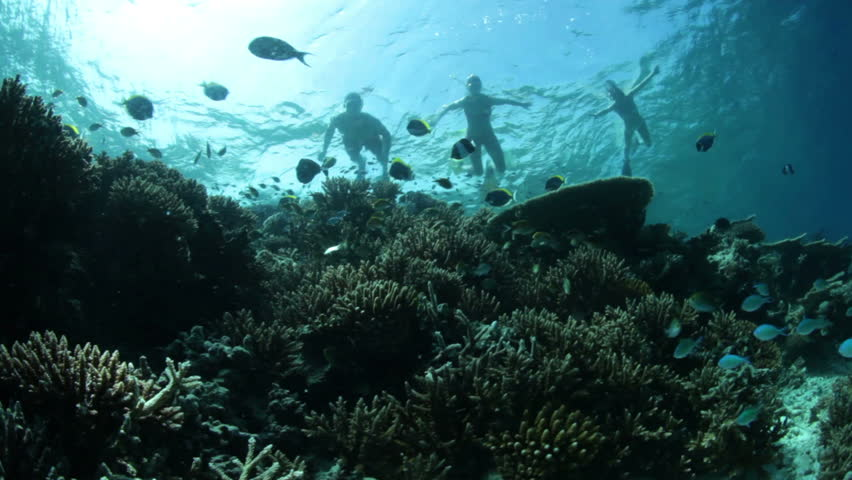 underwater landscape with fish and snorkelers