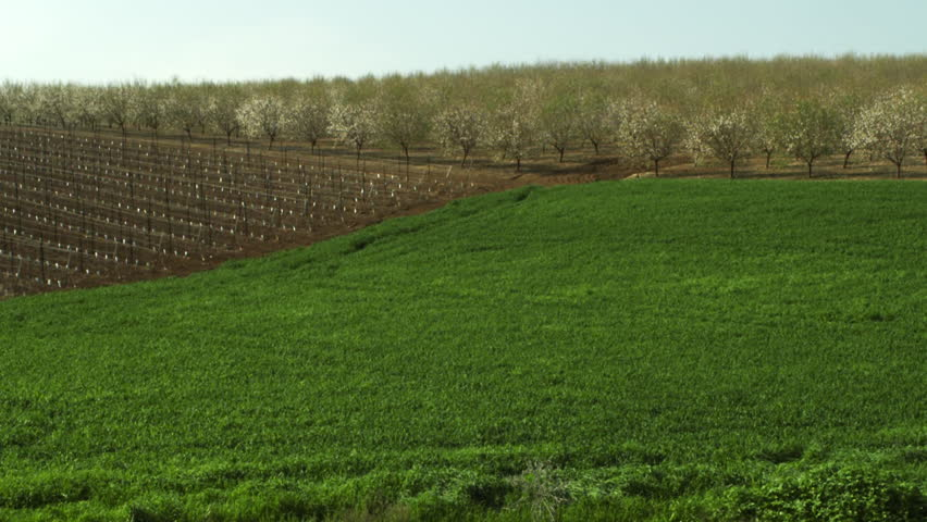 Almond orchards and a field shot in Israel.