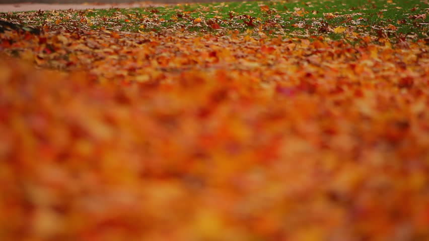 Leaf-covered grass with changing depth of field - HD stock video clip