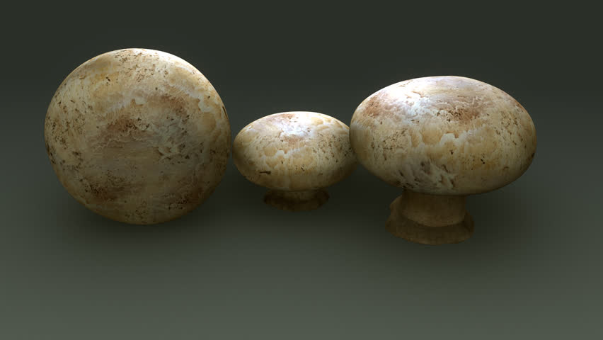 Header of Agaricus