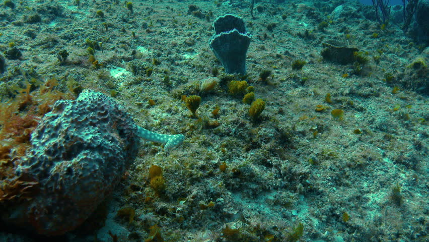 Sea snake slithers down rocky coral hill #20655319