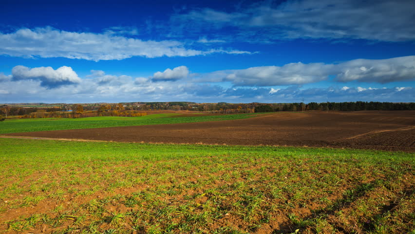 Green young cereal field under blue cloudy sky. 4k timelapse. #21234136