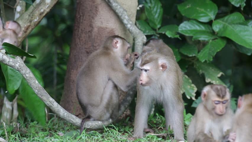 Monkey family in nature    Shutterstock HD Video #21449362