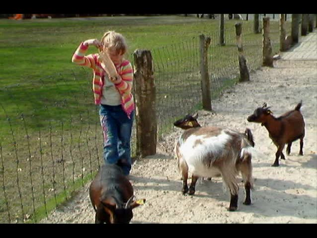 Girl almost attacked by goats - SD stock footage clip