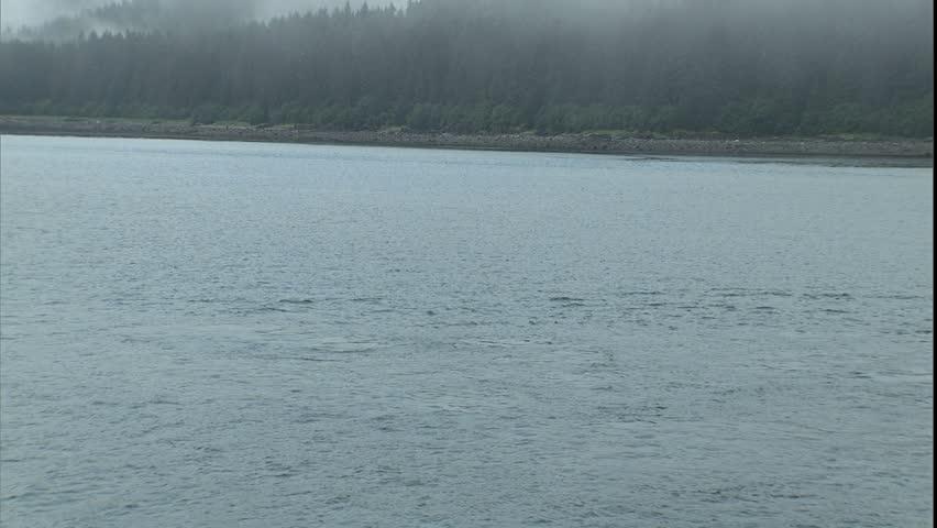 Humpback Whale Breach and Swimming Seals, Point Adolphus, Alaska - HD stock video clip
