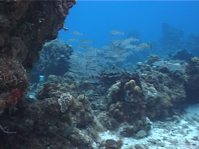 Ocean Scenery Swimming Underwater In Mexico Stock Footage ...