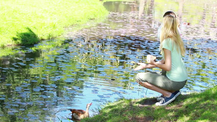 Woman nourishing a duck in a park - HD stock video clip