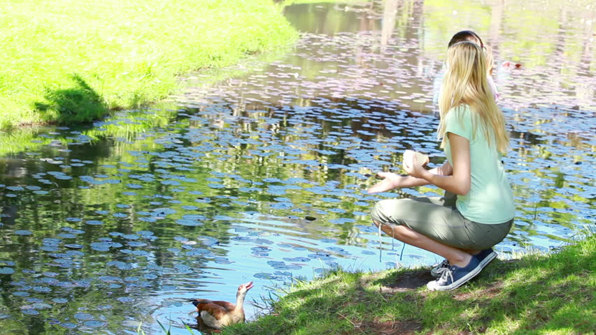 Woman nourishing a duck in a park - HD stock video clip