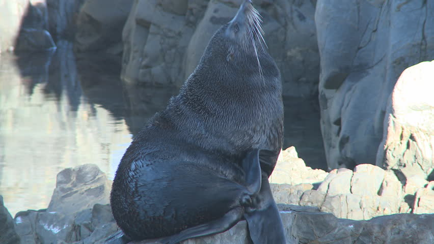 seal on a rock 2