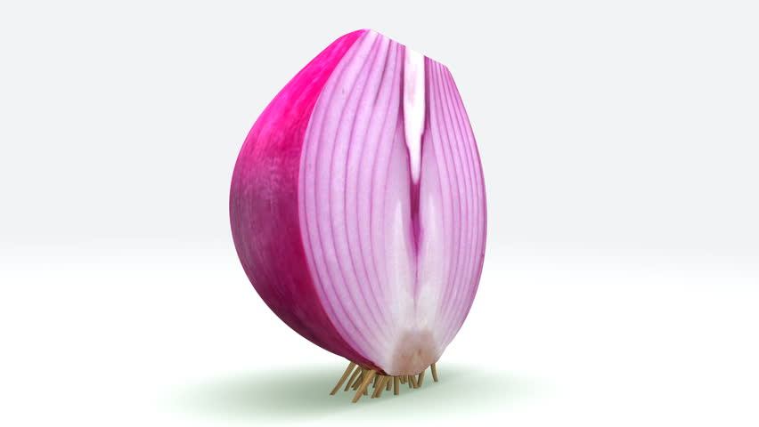Header of Allium cepa