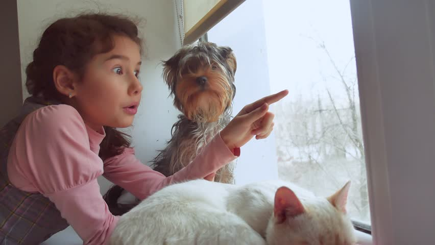 Girl teen and pets cat and dog looking out pet the window, the cat sleeps | Shutterstock HD Video #23069164