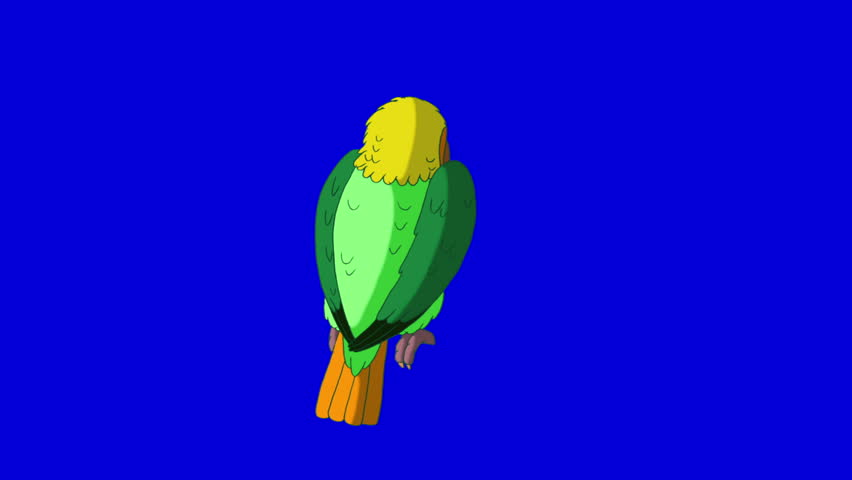 Green Parrot Turns. Animal on Blue Screen. Looped motion graphic. | Shutterstock HD Video #23184832