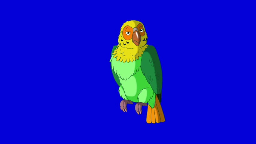 Green Parrot Wakes Up. Animal on Blue Screen. Looped motion graphic. | Shutterstock HD Video #23184868