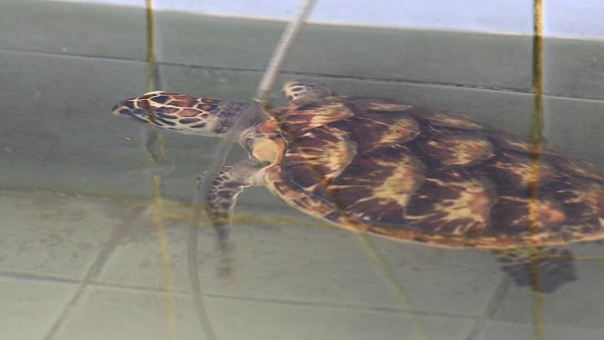 Green sea turtle  | Shutterstock HD Video #23213866