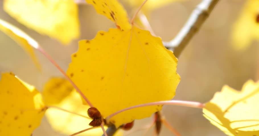 Ladybug at the yellow autumn leaf. #23456506