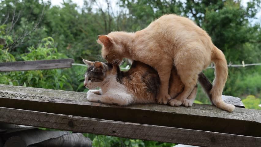 Homosexual behavior in animals